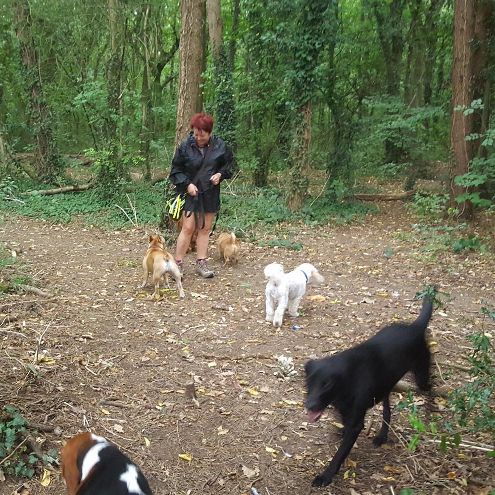 Stevenage dog walker