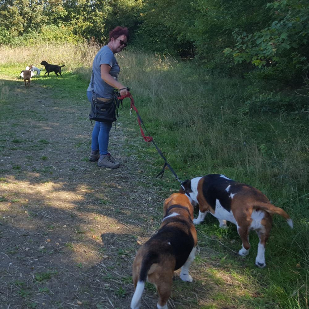 Professional dog walker Stevenage