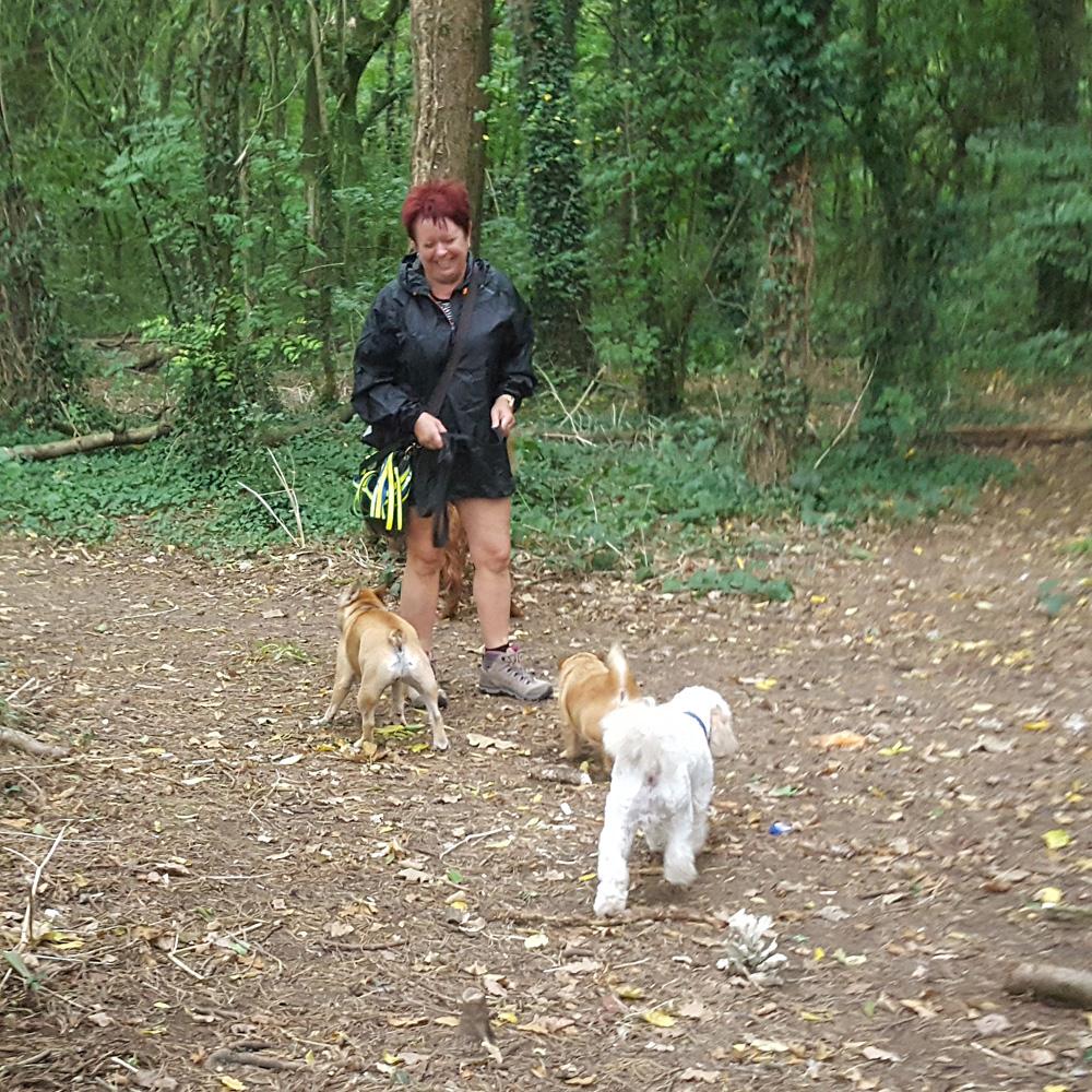 Dog walking Stevenage