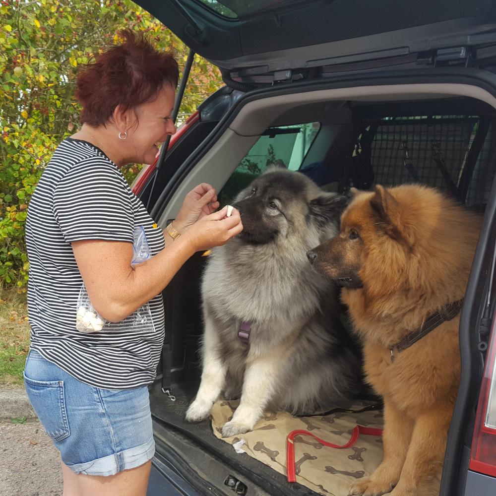 Dog walker Great Ashby