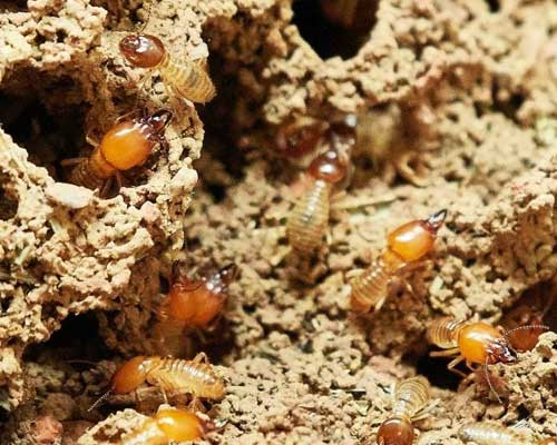 Signs Of A Termite Infestation Termite Damage