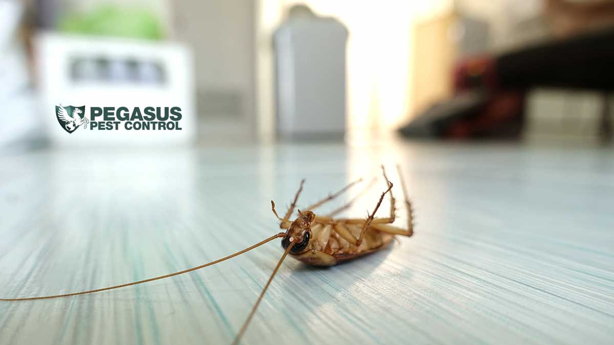 10 Interesting Facts About Bugs and Pests