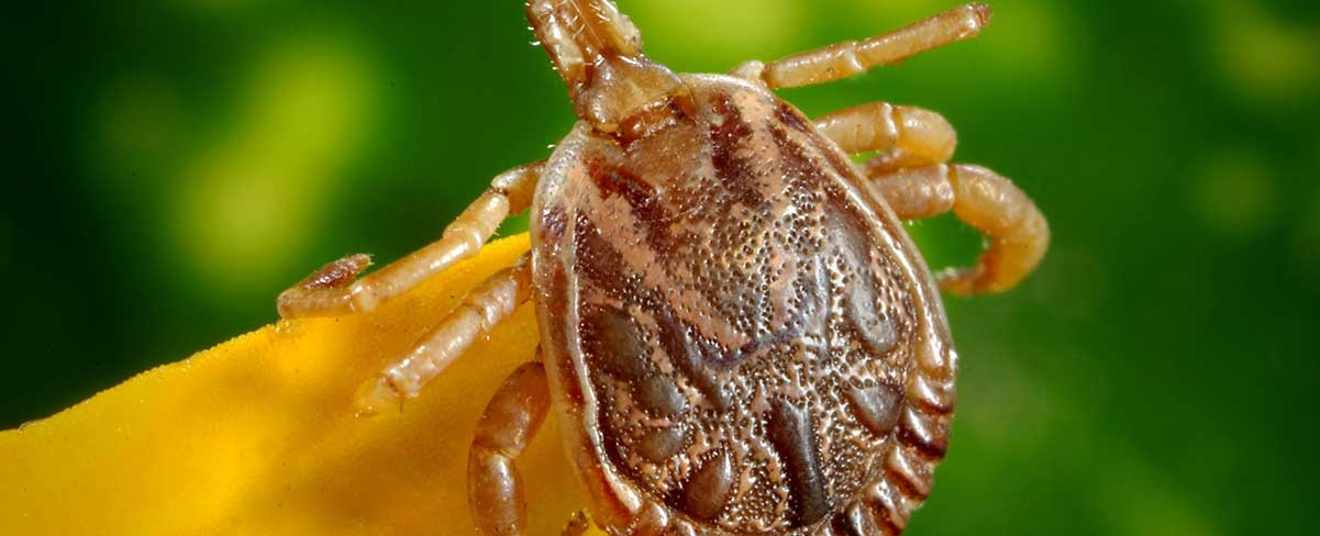 8 Interesting Facts About Ticks in Sacramento, CA