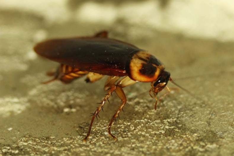 A Guide to the Worst Pests in Sacramento, CA | Part 1