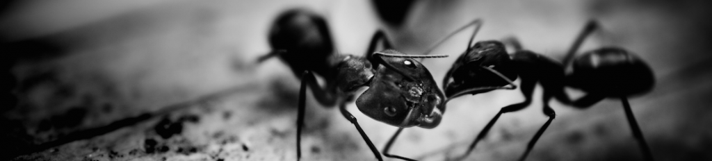 How To Get Rid Of Ants | Carpenter Ant Edition