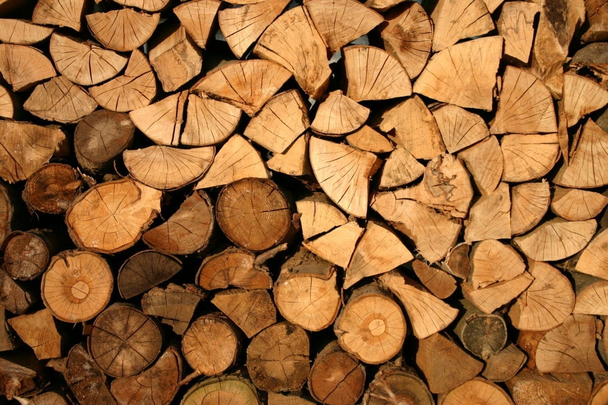 The 7 Firewood Pests You Need To Look Out For (Watch Out For #6 It's Poisonous)