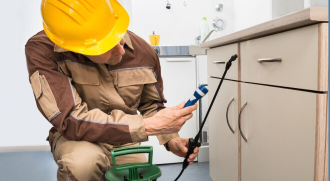 How Pest Professionals Improve Our Quality of Life