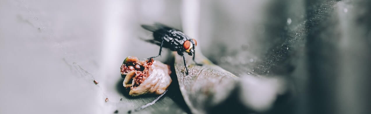 How to Keep a Fly Infestation Under Control