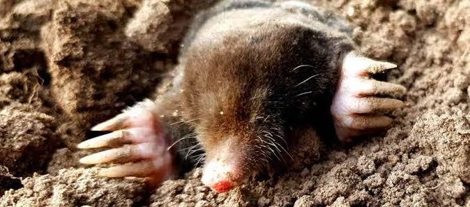 Does Your Garden Have Moles? Pegasus Pest Control