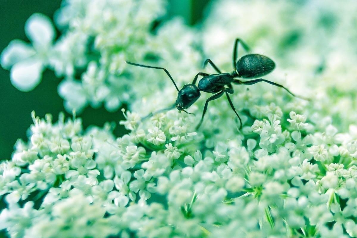 Ant Control in Sacramento, CA