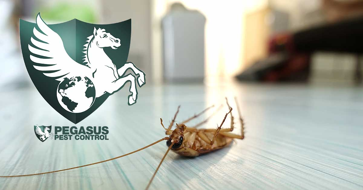 Best Pest Control Company in Sacramento, CA | Pegasus Pest Control