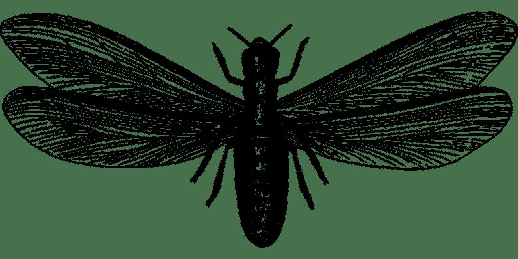 Swarming-Termites - Pegasus Pest Control