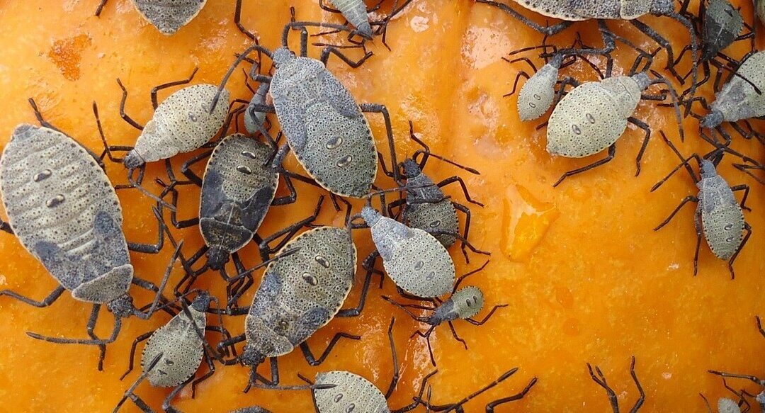 Why Fall Pest Control Is So Important