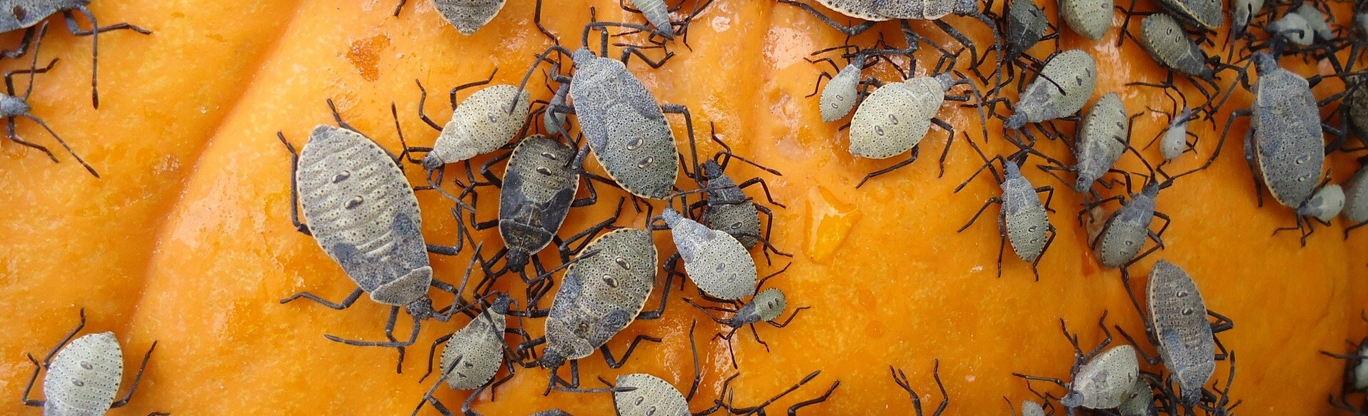Why Fall Pest Control Is So ImportantWhy Fall Pest Control Is So Important