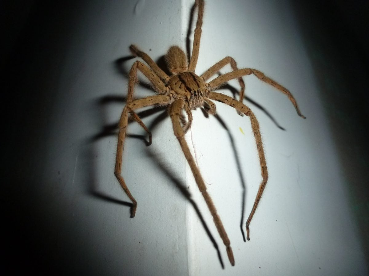 How to Attract Women: Love Lessons from a Wolf Spider