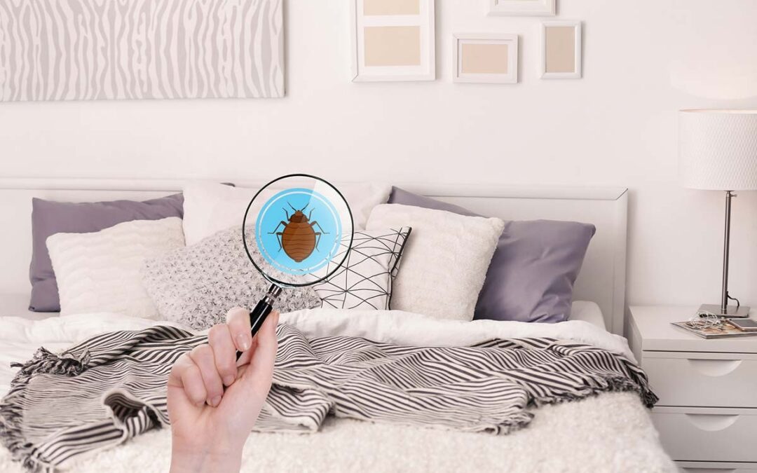 5 Key Warning Signs And Symptoms Of Bed Bugs