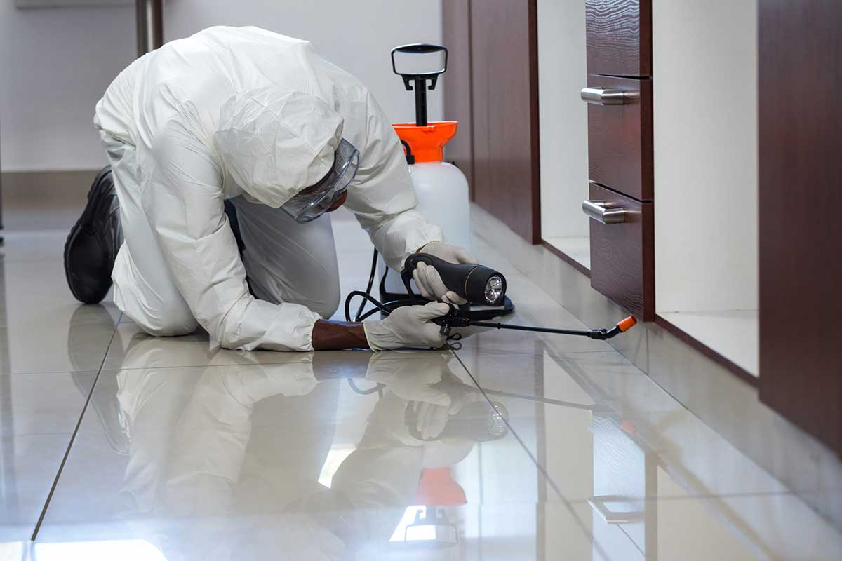 Important Questions to Ask the Best Pest Control Company in California