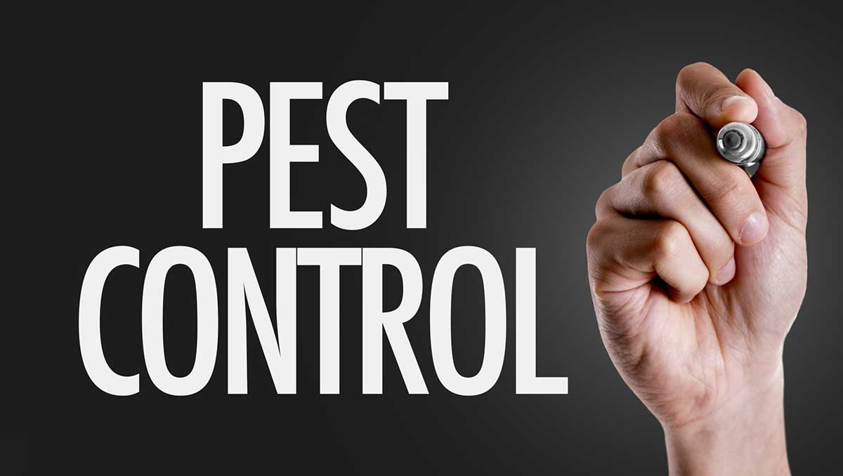 How to Find the Best Pest Control Company: 8 Tips to Keep in Mind