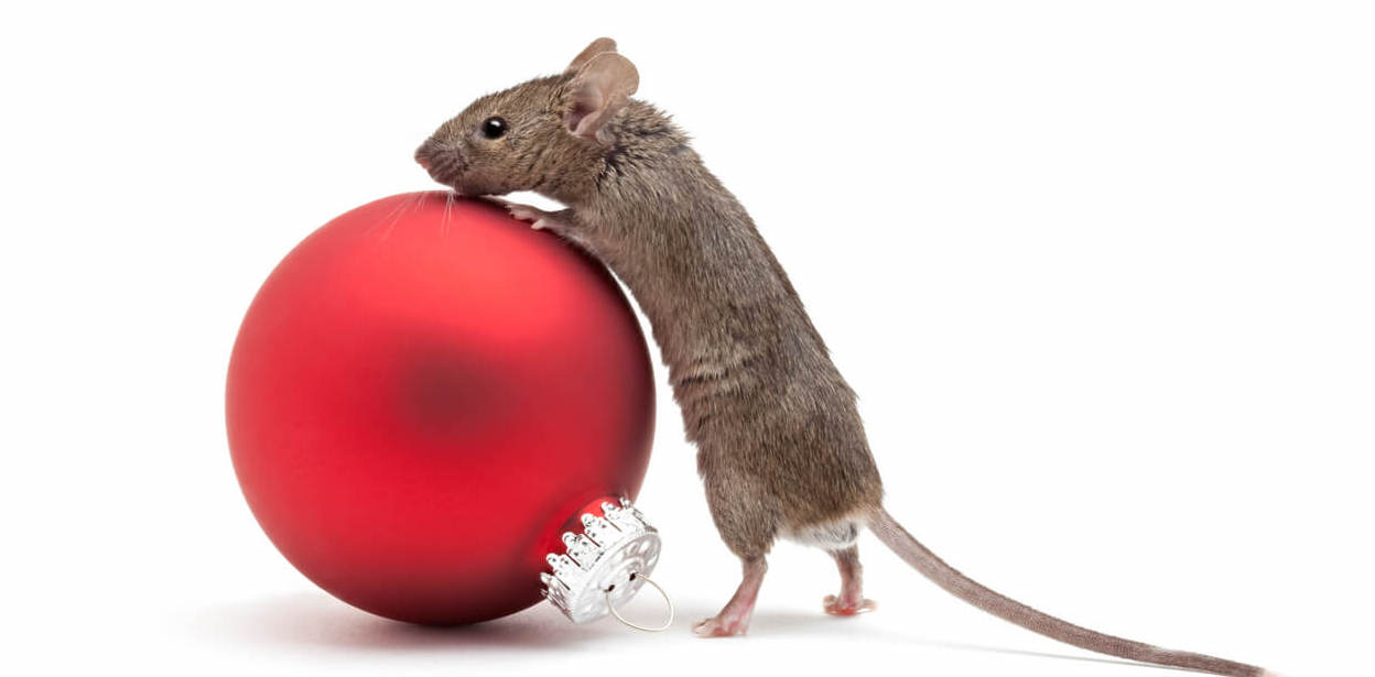 Pest Proofing Before Your Holiday Trip Tips