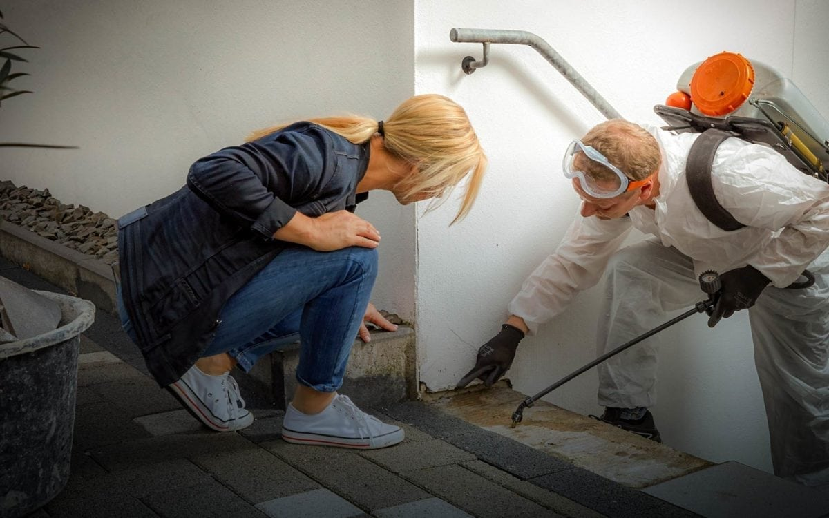 What Is A WDO Inspection? And Why Do They Cause Such Legal Issues?