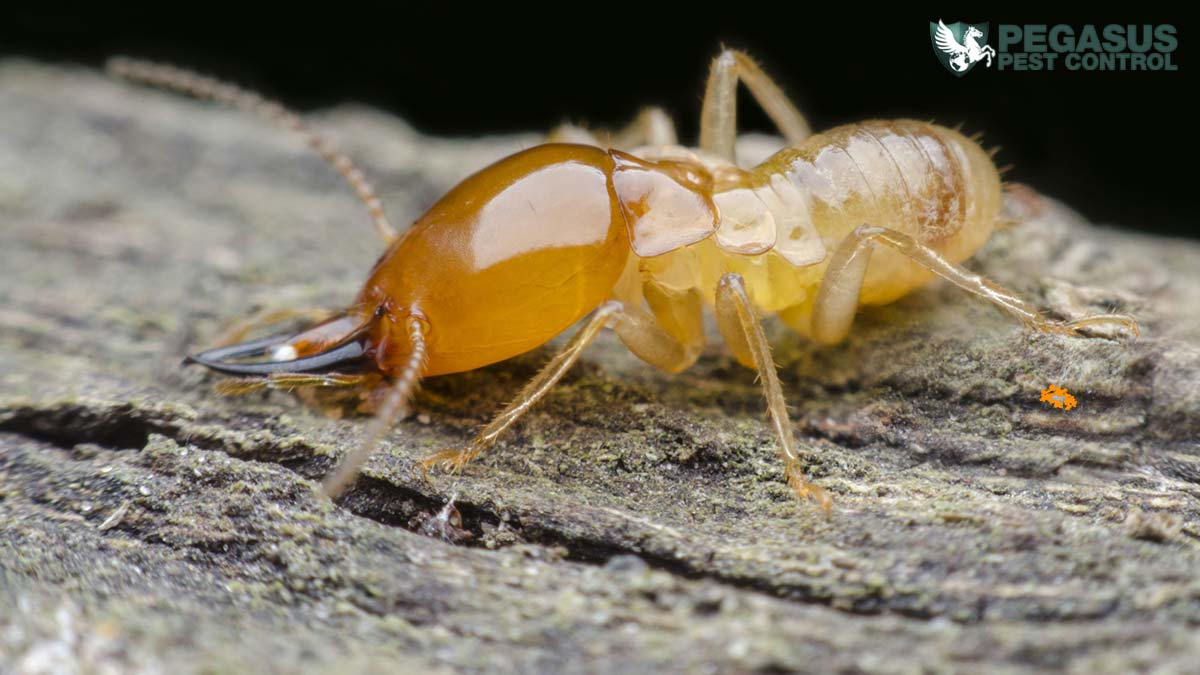 9 Warning Signs You Have Termites in Your Home