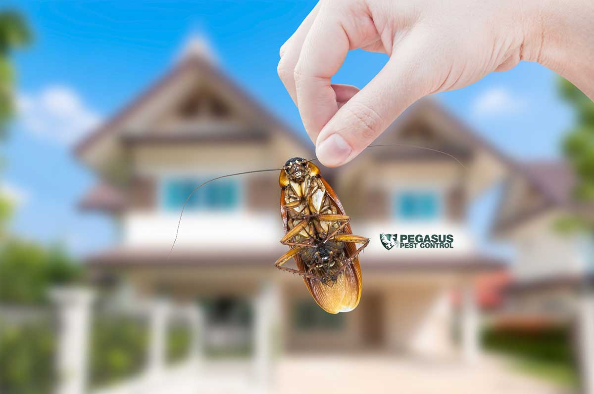 7 Pest Control Tips to Keep Critters Out of Your Home
