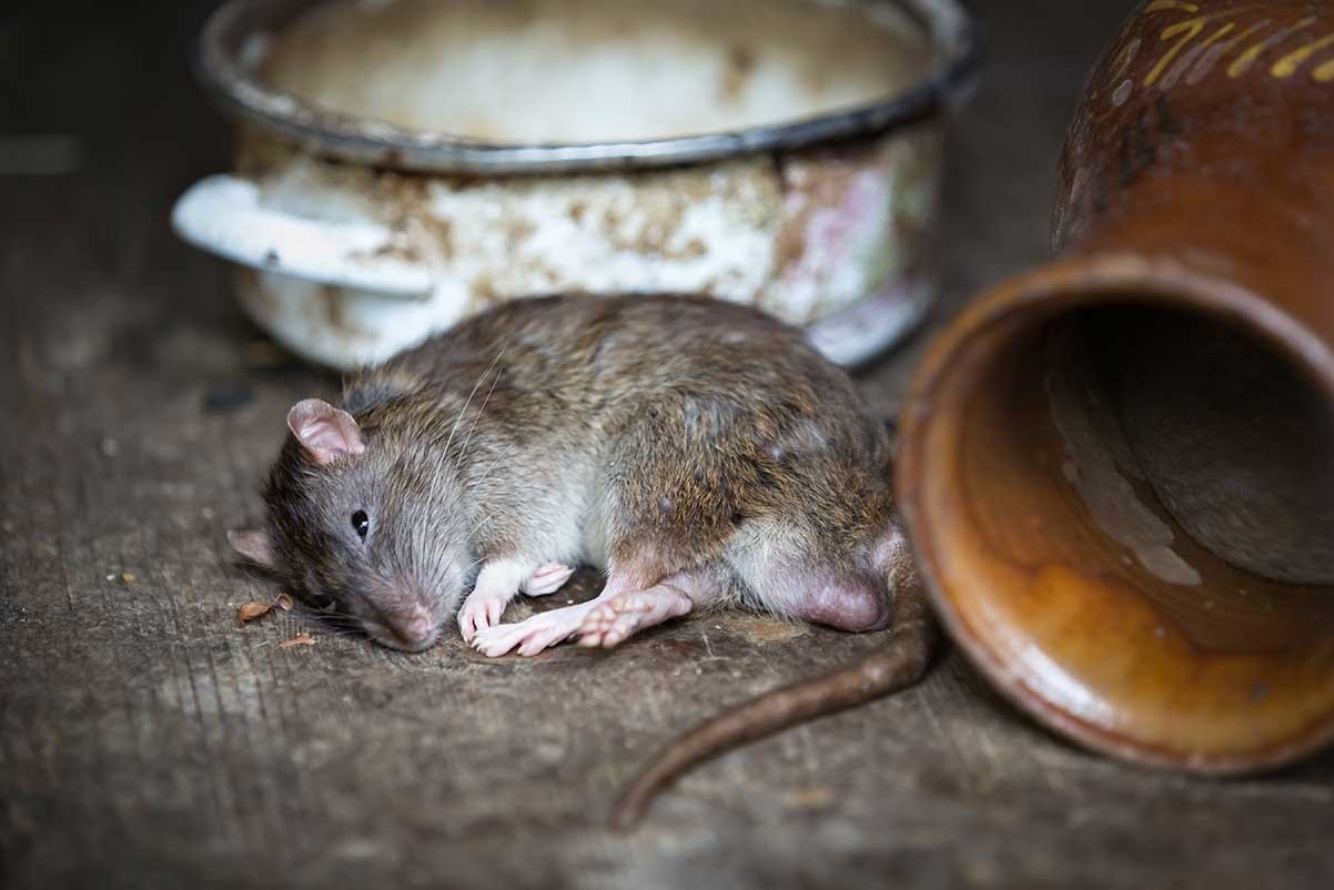 7 Common Pest Control Mistakes and How to Avoid Them