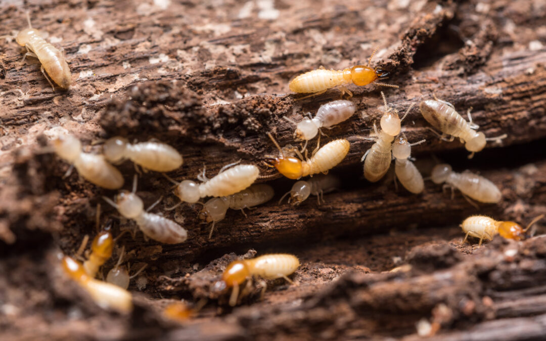 What Do Termites Do to Homes? A Detailed Guide