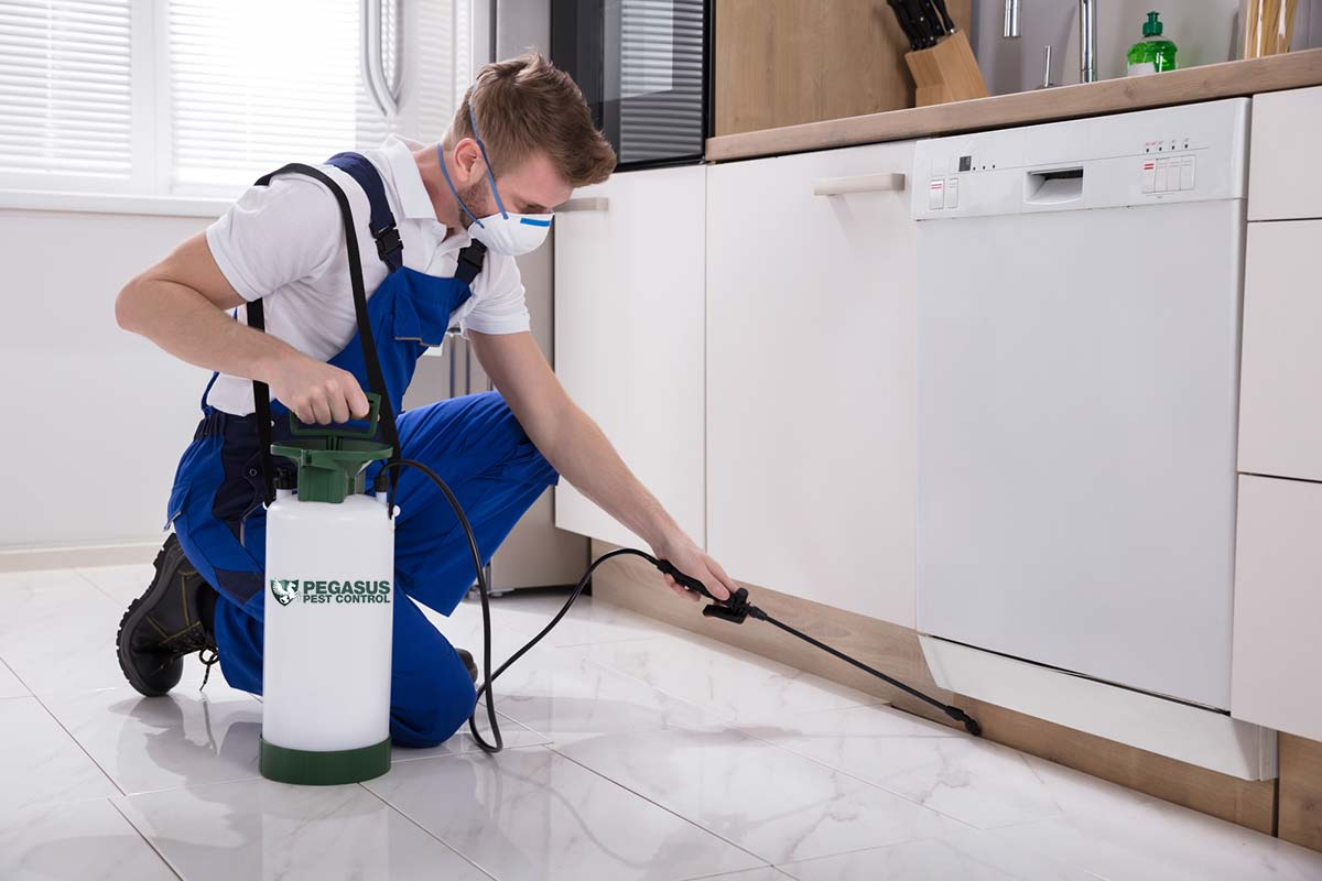 6 Mistakes to Avoid When Hiring a Pest Control Company