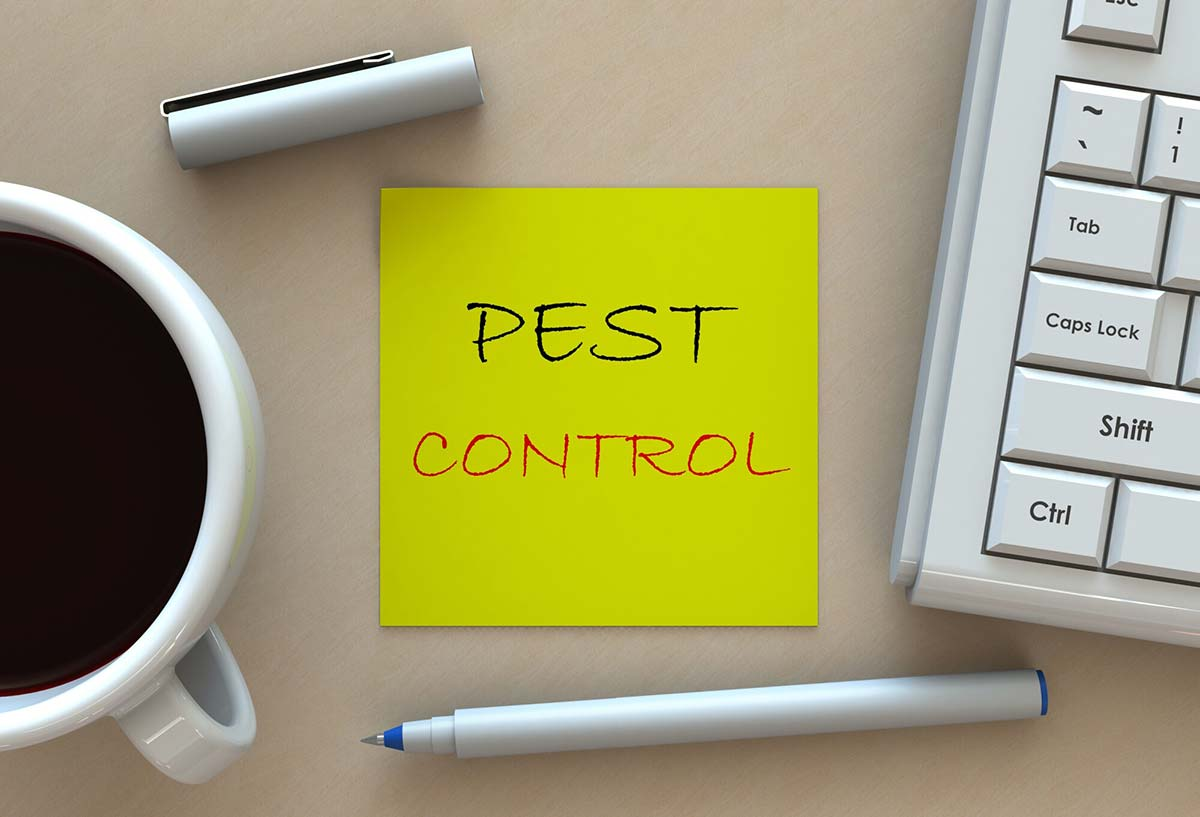 7 Signs You Need to Call Pest Control Immediately