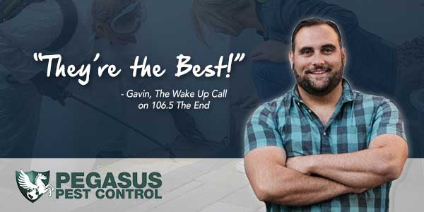 GAVIN is all for Pegasus Pest