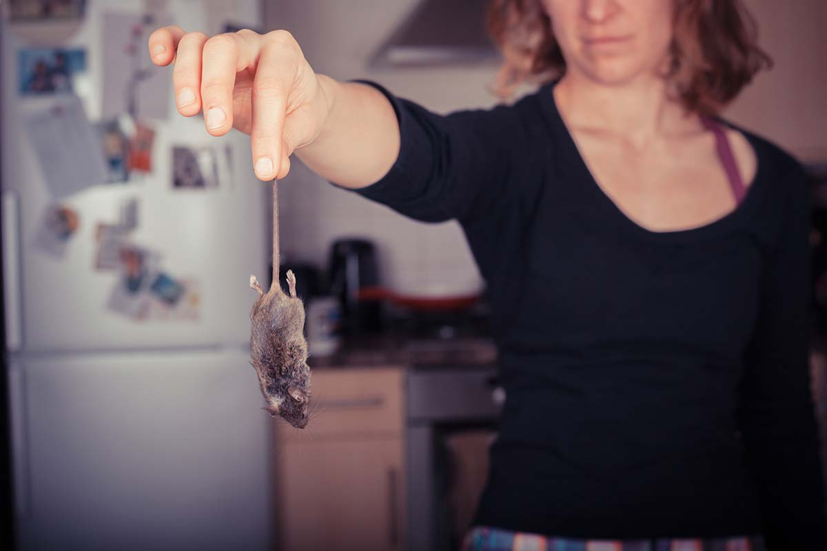 6 Signs of Mice You Should Definitely Not Ignore