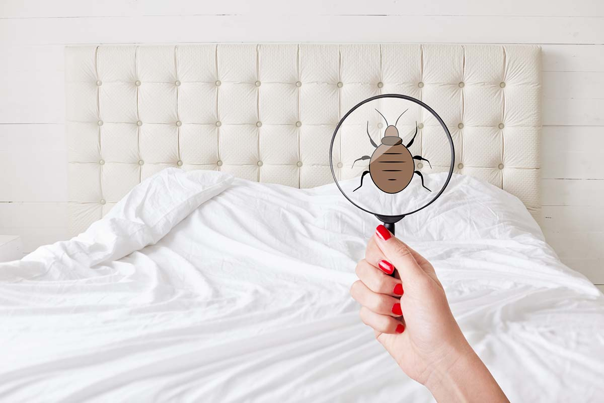 7 Critical Tips for Preventing a Bed Bug Infestation