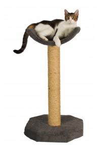 kittycot