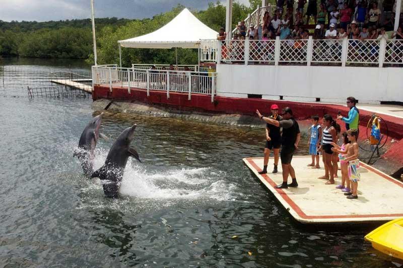 dolphin show in cuba