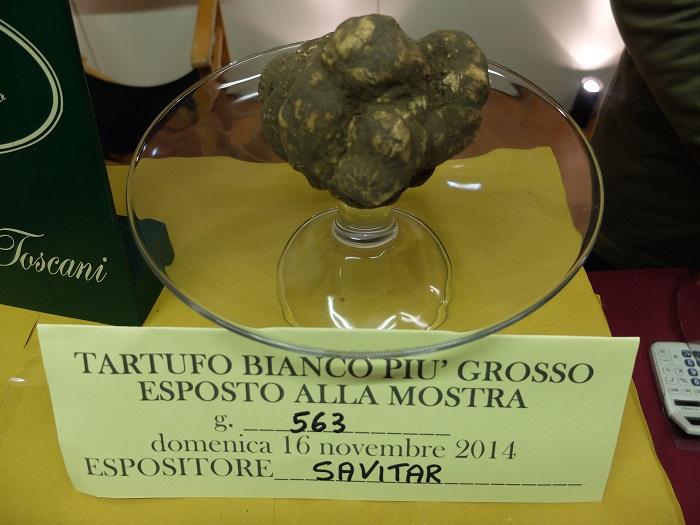 giant white truffle san miniato | girlinflorence