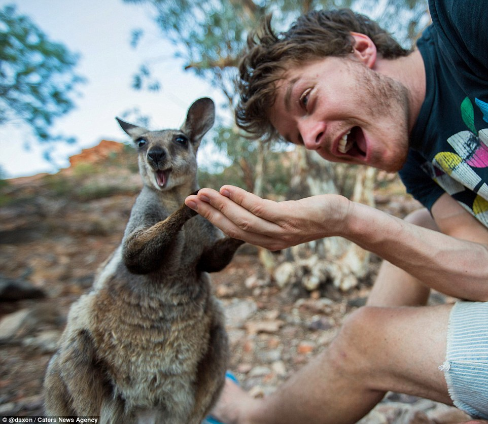 2F911B2D00000578-3370281-This_wallaby_is_not_camera_shy_in_the_slightest_and_puts_its_paw-a-7_1450800262890