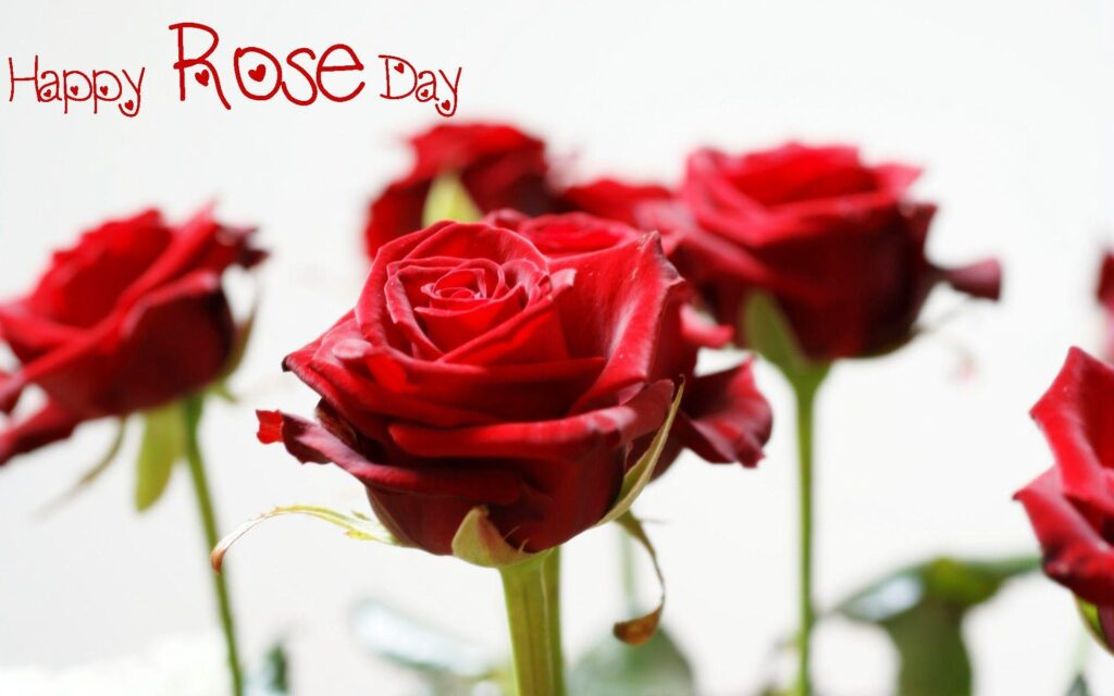 20 Best Rose Day Images Picture Download