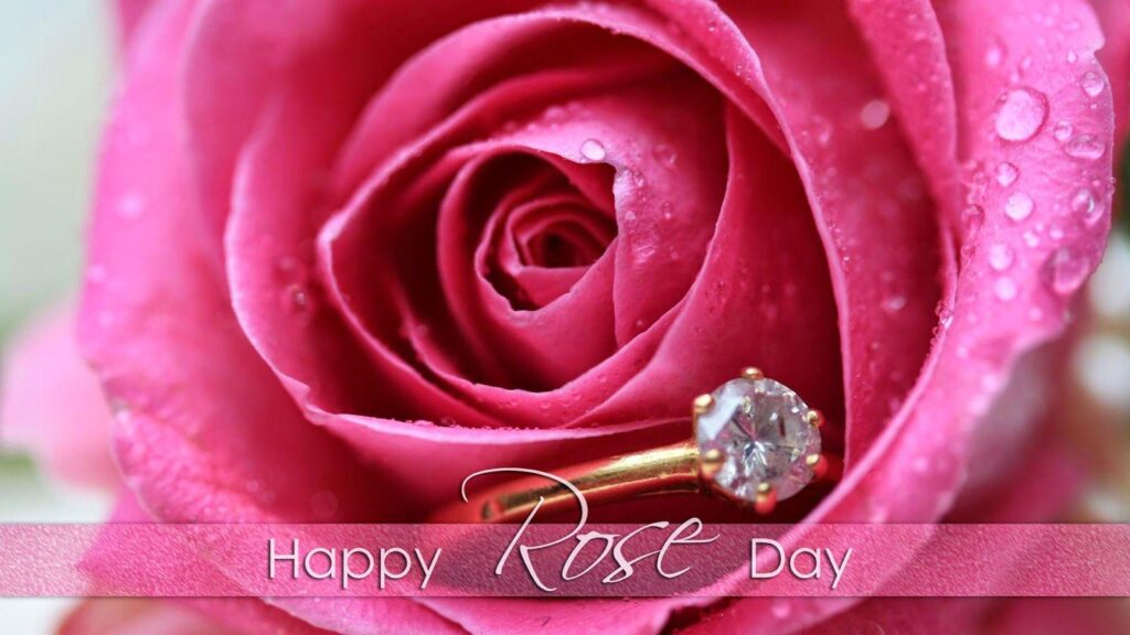 Rose Day Images Picture Download