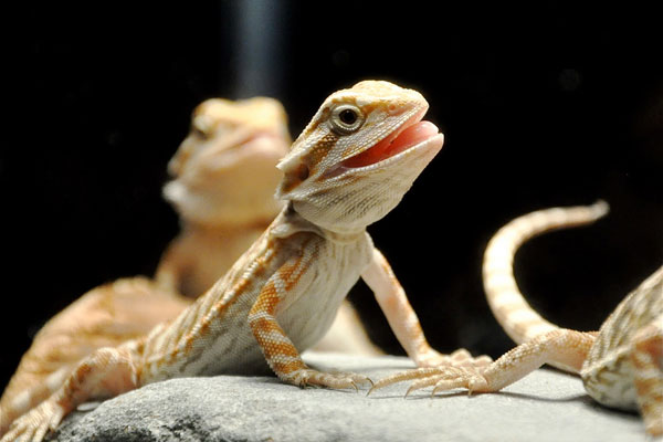 5 Features To Look For In Reptile Thermometers