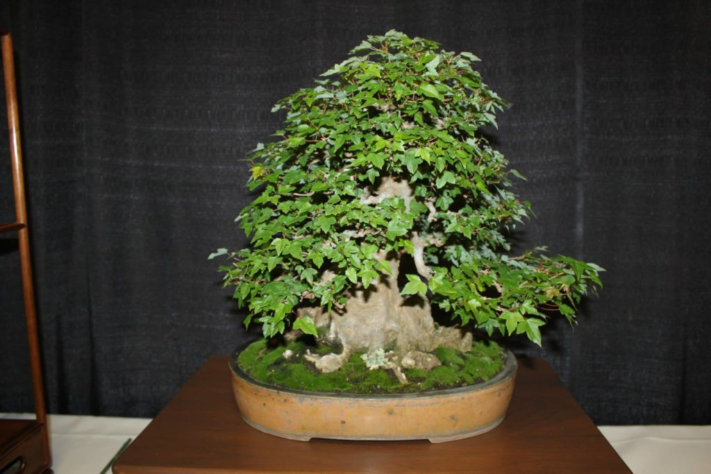 Schedule Of Events Greater Louisville Bonsai Society