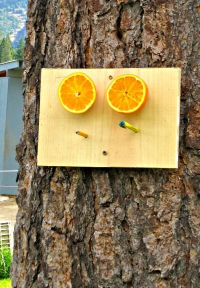 bird-feeder-oranges-3-400x575