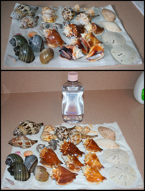 shell_cleaning2
