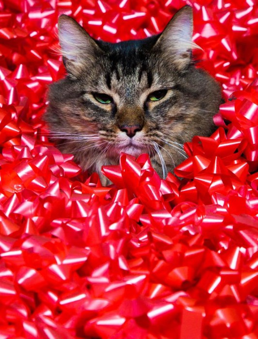 Cat and Bows Christmas Card