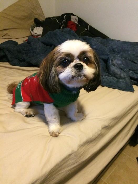 Dog Ugly Christmas Sweater