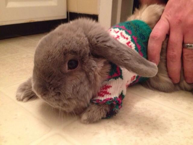 Pet Ugly Christmas Sweater