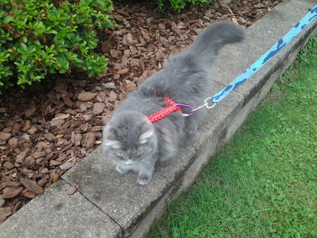 Paracord Pet Harness Instructables