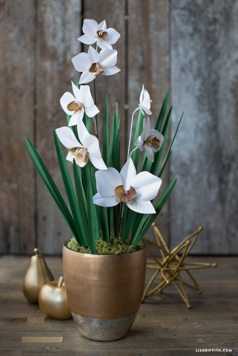 Paper_Cymbidium_Orchid_Plant-724x1083