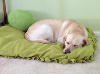 DIY Doggy Bed