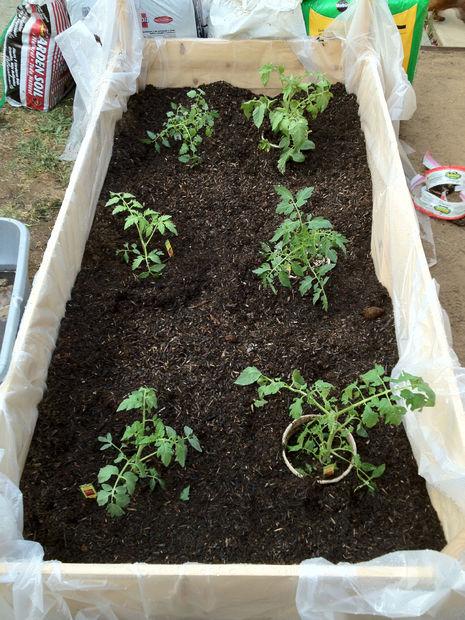 Backyard Garden Boxes